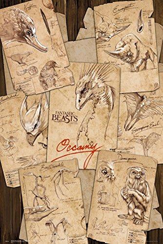 Poster Fantastic Beasts - Zeichnungen - 61 x 91.5 cm | PostersDE